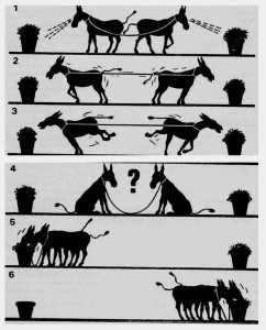 donkeys cooperation